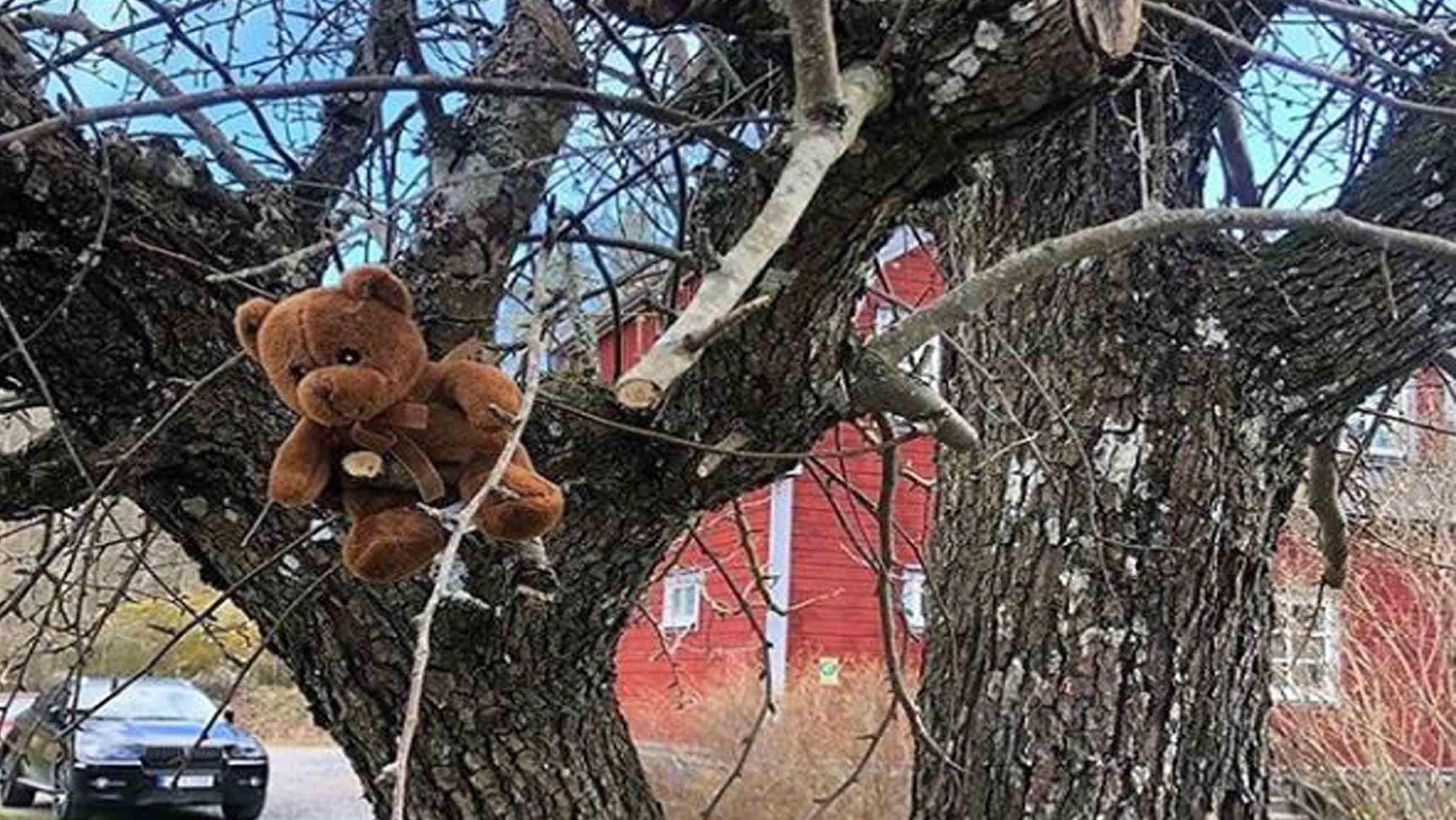 Björniträd